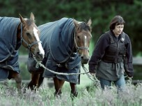 BETTER DAYS - 2 Nov 2001:  Trainer Sheila Laxon leads Andrella (left) and Caulfield Cup winner Ethereal, after  a light training session at Macedon Lodge, near Mt Macedon, Melbourne, Australia. Digital Image. Mandatory Credit: Mark Dadswell/ALLSPORT