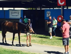 A potential owner putting a horse through its paces at 2016 Inglis Premier Yearling Sale, Melbourne