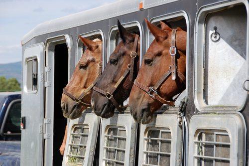 HORSE TRANSPORT SERVICE